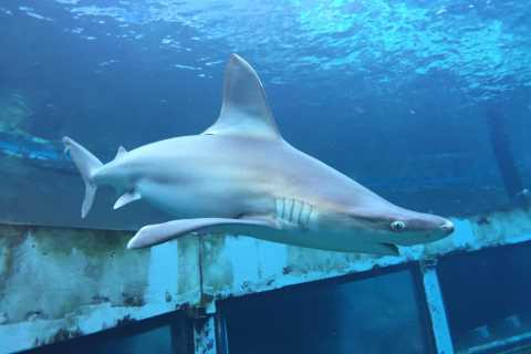 Desde Waikiki: Oahu Adventure Tour con Shark Encounter