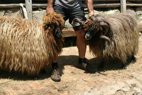 Bansko: Rare Bulgarian Pets Experience