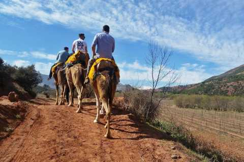 From Marrakech: Atlas Mountains 45-Minute Horseback Ride