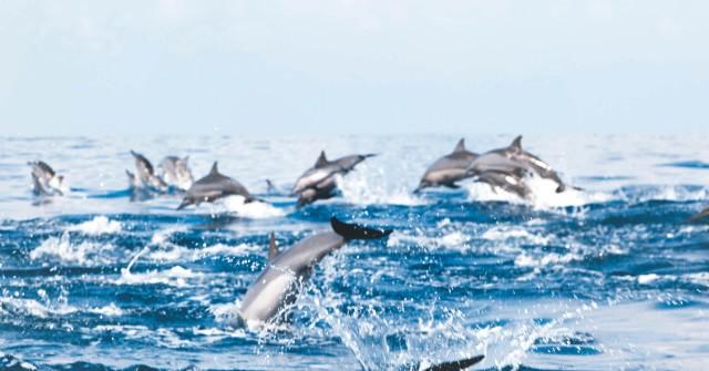 Muscat: dolfijnen spotten en snorkelen