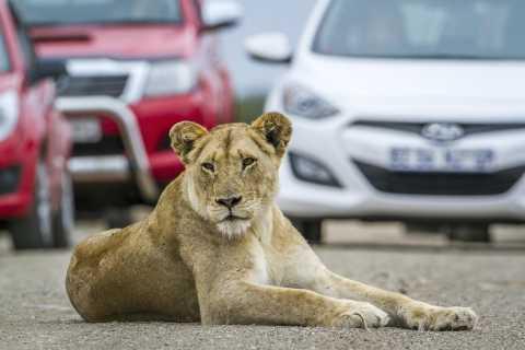 Hartbeespoort: Self-Drive Lion und Safari Park Tour