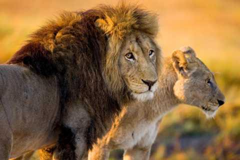 Hartbeespoort: 2,5-stündige private fotografische Safari-Tour
