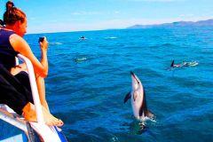 Pula: Experiência de observação de golfinhos naturais com jantar