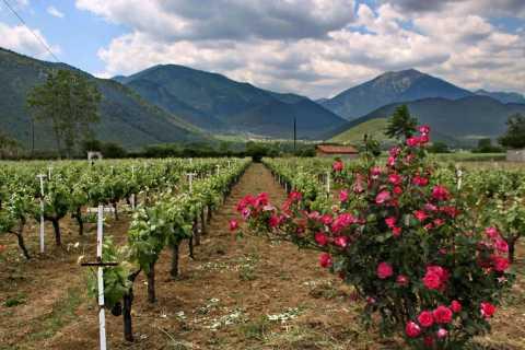 Aus Kalamata: Traditionelles griechisches Weingut und Weinprobe