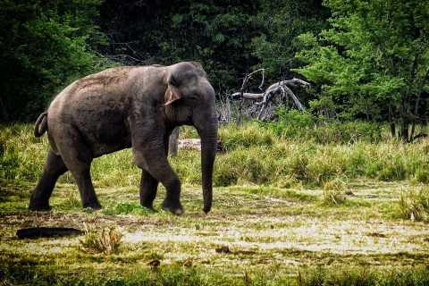 From Ella: Udawalawe National Park Safari Tour