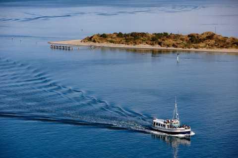 Dunedin: Wildlife Cruise and Penguin Colony Shore Excursion