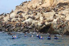 Ilhas Palomino: Nade com Leões-Marinhos no Oceano Pacífico