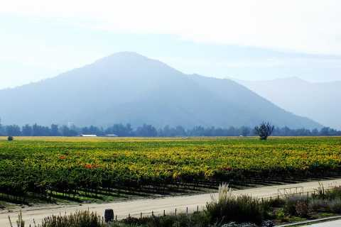 From Santiago: Maipo Valley Vineyards Tour