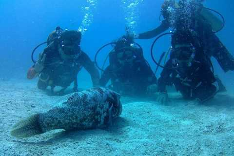 Koh Chang: Discover Scuba Diving for Beginners with 2 Dives