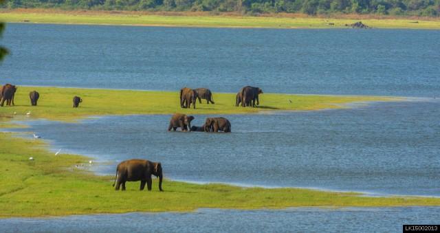 Tusker Safari in Kalawewa National Park