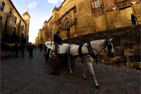 Cordoba: Private Horse-Drawn Carriage Tour