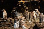 Chiloe Island: Ancud, Caulin and Puñihuil Penguins Colony
