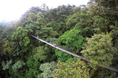 Arenal Hanging Bridges Half-Day Tour from La Fortuna