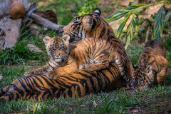 Zoológico de San Diego e Safari Park: ingresso de 2 dias
