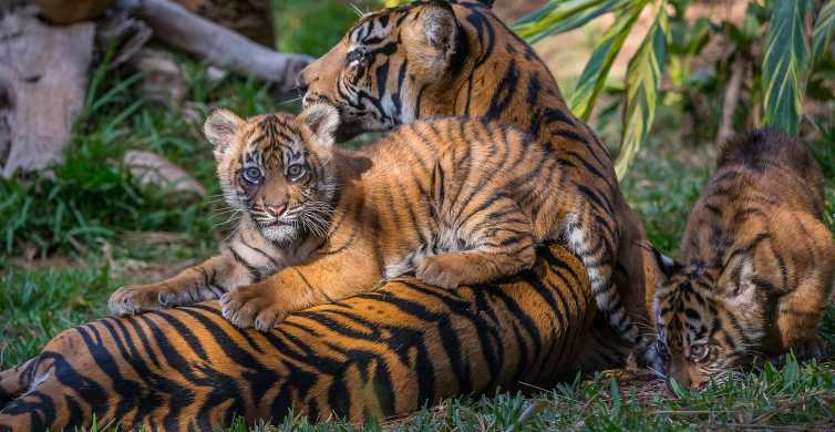 San Diego Zoo and Safari Park: 2-Day Entry Ticket