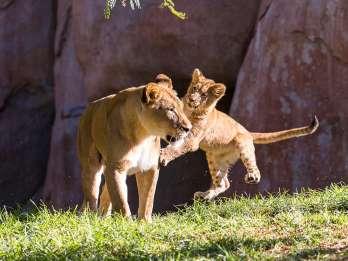 San Diego Zoo und Safari Park: 2-Tage-Eintrittskarte