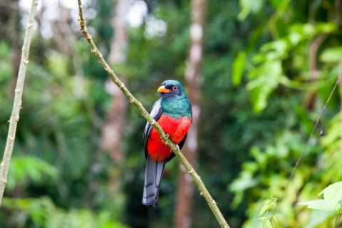 Liberia: Private Bird Watching Tour