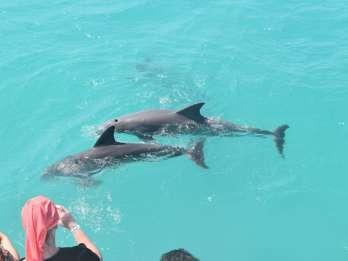 Key West: Delfinbeobachtung und Schnorcheln