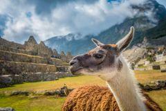 De Cusco: Excursão Pequeno Grupo Machu Picchu com Ingresso