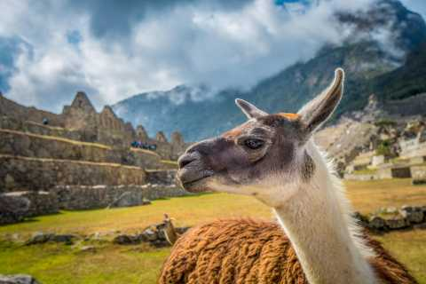 Cusco: Machu Picchu Small Group Tour with Tickets