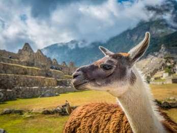 Cusco: Machu Picchu Kleingruppenausflug mit Tickets