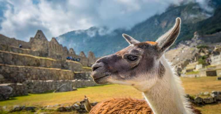 Cuzco: tour de Machu Picchu grupo de reducido con entradas