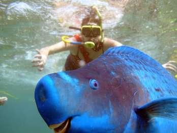 Key West: SNUBA-Erlebnis