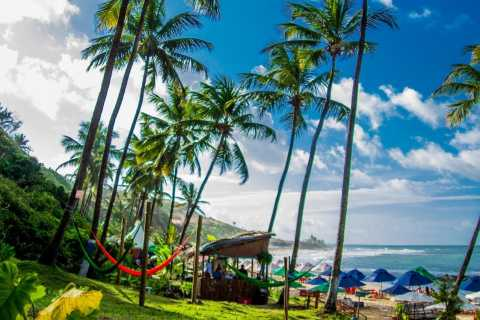 From Natal: Pipa Beach Full-Day Excursion