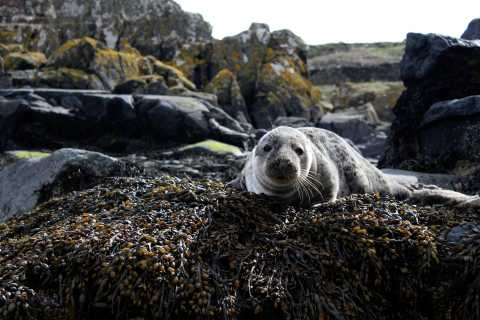 From Los Cabos: Sea lion Snorkel & Balandra Beach Day La Paz