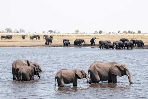 Chobe: 2-Day Mobile Camping Safari