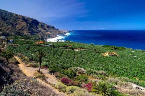 North Tenerife: Full-Day Guided Tour