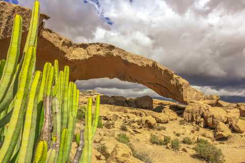South Tenerife: Full-Day Volcano Tour