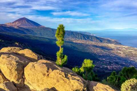 Tenerife: Teide & Flavors of The North Shore Excursion