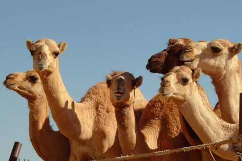 From Dubai: Al Ain Garden City Full-Day Sightseeing Tour