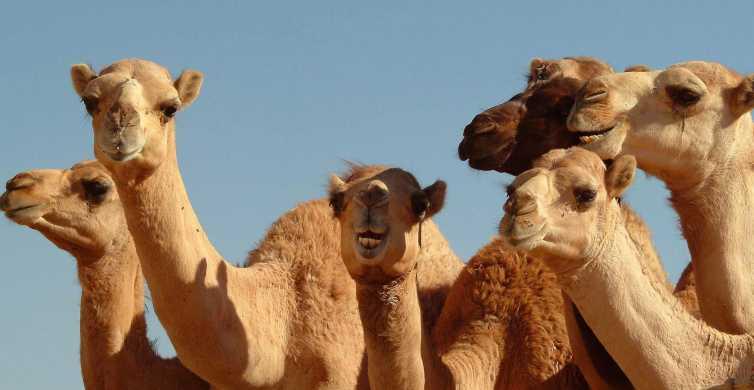 De Dubai: Excursão turística de dia inteiro a Al Ain Garden City