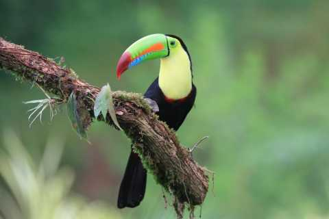 La Fortuna: Bird Watching Experience
