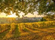 Aus Bologna und Modena: Weintour mit Mittagessen