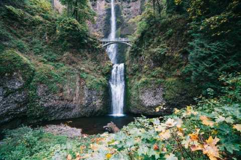 Portland: Columbia River Gorge Waterfalls Nachmittagstour