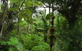 El Yunque National Rainforest: Nature Walk Adventure
