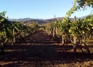 Von Taormina: Etna Wineries Kleingruppentour