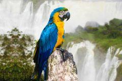 De Puerto Iguazú: Excursão de Meio Dia Cataratas Brasileiras