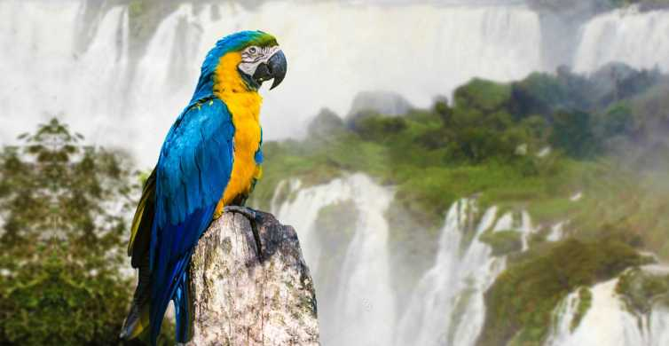 From Puerto Iguazu: Half-Day Brazilian Falls Excursion