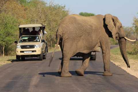 Krüger-Nationalpark: Justicia Village Visit & Safari Tour