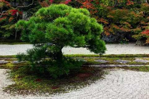 Kyoto: Zen Garden, Zen Mind Half-Day Tour