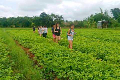 From Nyaungshwe Area: Kakku Pagoda Day-Trip with Short Trek