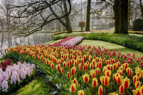Royal Flower Auction & Keukenhof Tulip Gardens
