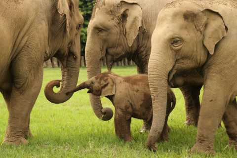 Chiang Mai: Ethical Elephant Observation Nature Park Visit