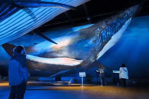 Reykjavik: Avistamiento de ballenas + Exposición de ballenas de Islandia