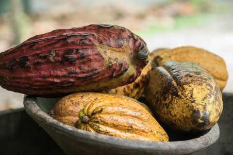 La Fortuna: Chocolate Plantation & Waterfall Tour