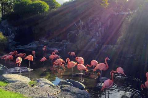 Buenos Aires: Bioparque Temaikén com Traslados
